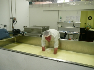 Stuart up to his arms in curd