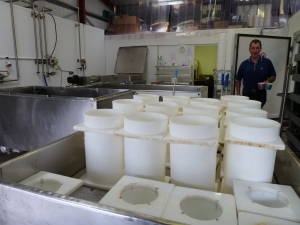 Upturned moulds being sprayed with hypo in the curd table