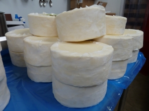 Some newly bandaged Matured Cow Cheese ready to go into the maturing room